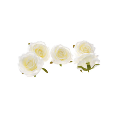 Λευκό τριαντάφυλλο κεφαλί