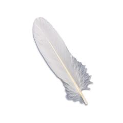Πούπουλο φτερό λευκό 13εκ 18τεμ