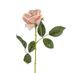 Τριαντάφυλλο old pink 8x52εκ